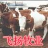 养牛的利润|养牛的成本|养牛的效益