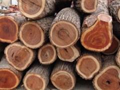 欧洲红橡白橡/枫木/白杨/榉木代理进口