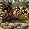 提供服务木材进口清关的流程是怎样的?