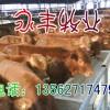 出售改良肉牛犊1000-1500元一只